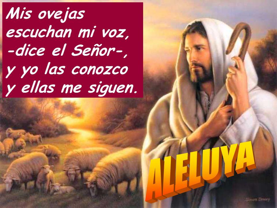 Mis ovejas escuchan mi voz, -dice el Señor-, y yo las conozco y ellas me siguen.