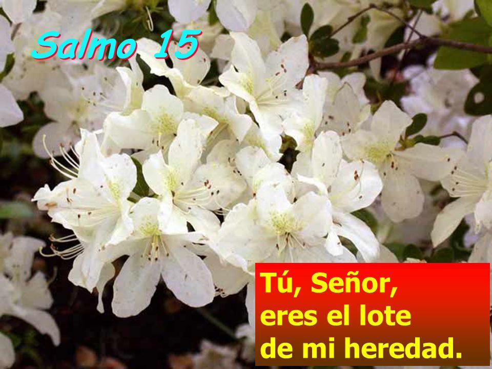 Salmo 15Tú, Señor, eres el lote de mi heredad.
