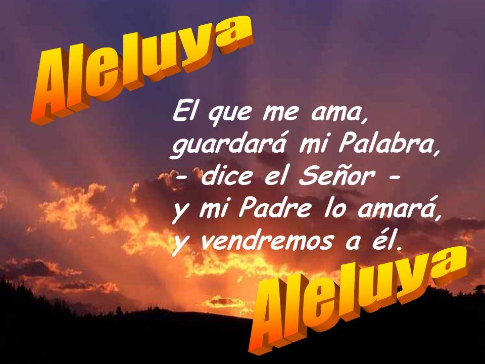 Aleluya El que me ama, guardará mi Palabra, - dice el Señor - y mi Padre lo amará, y vendremos a él.