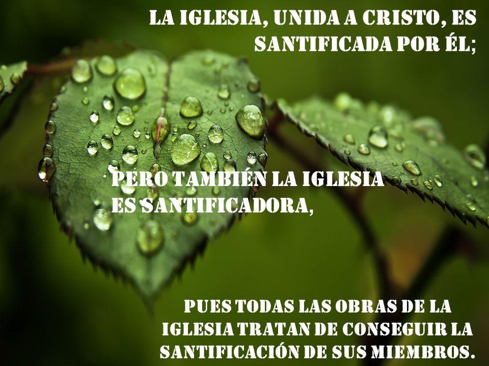 La Iglesia, unida a Cristo, es santificada por Él;
