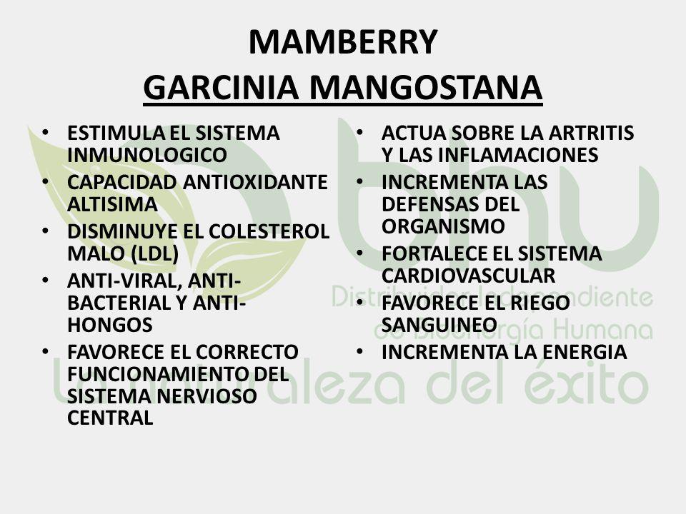 MAMBERRY GARCINIA MANGOSTANA