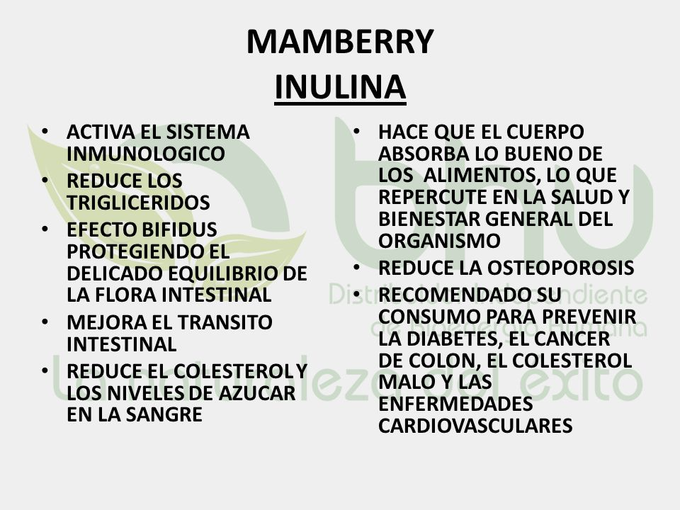 MAMBERRY INULINA ACTIVA EL SISTEMA INMUNOLOGICO