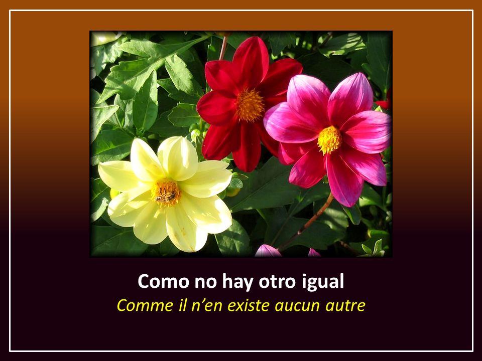 Como no hay otro igual Comme il n'en existe aucun autre