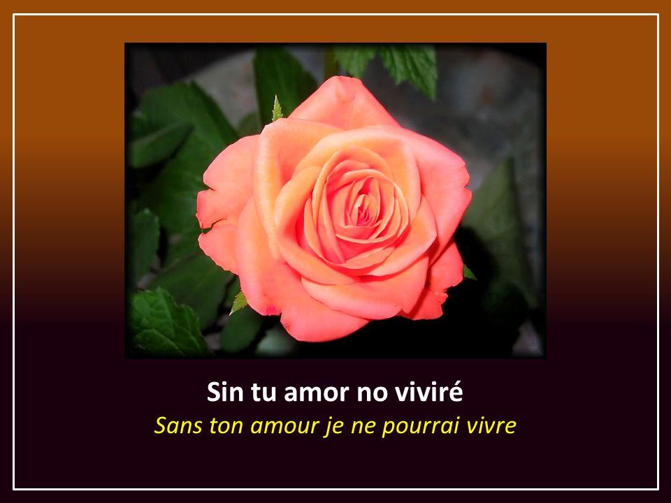 Sin tu amor no viviré Sans ton amour je ne pourrai vivre