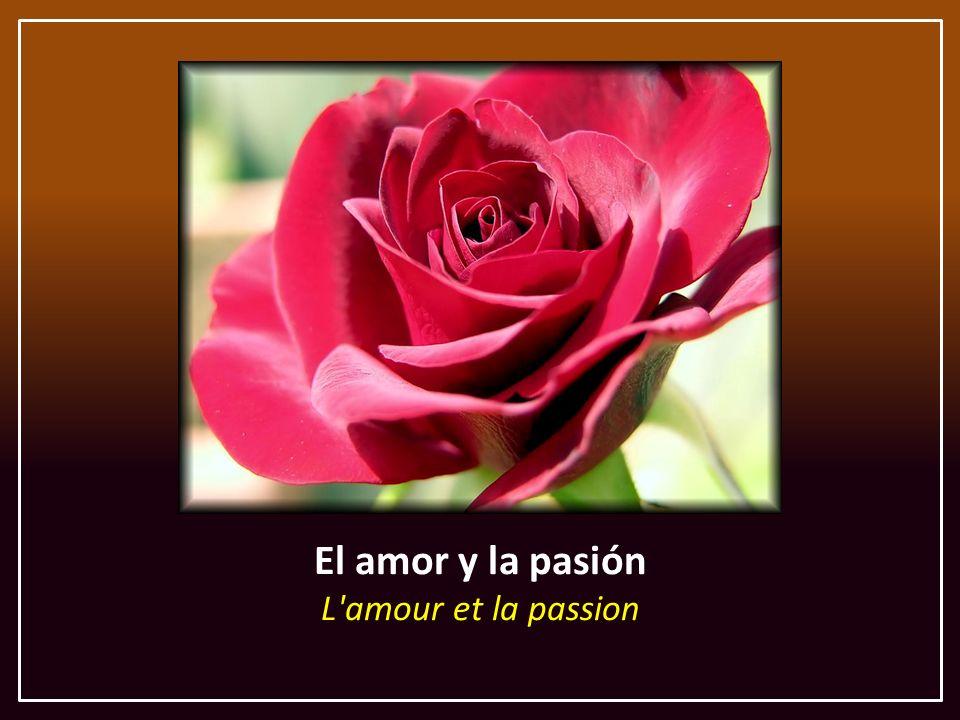 El amor y la pasión L amour et la passion