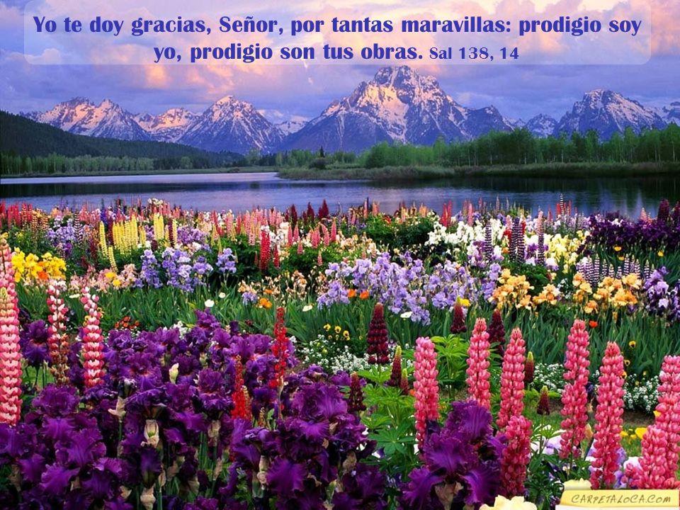 Yo te doy gracias, Señor, por tantas maravillas: prodigio soy yo, prodigio son tus obras.