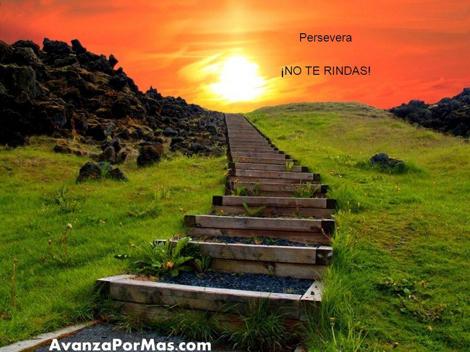 Persevera ¡NO TE RINDAS!