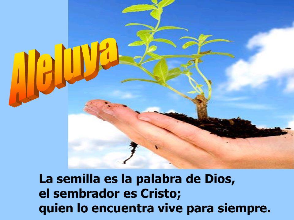 Aleluya La semilla es la palabra de Dios, el sembrador es Cristo; quien lo encuentra vive para siempre.
