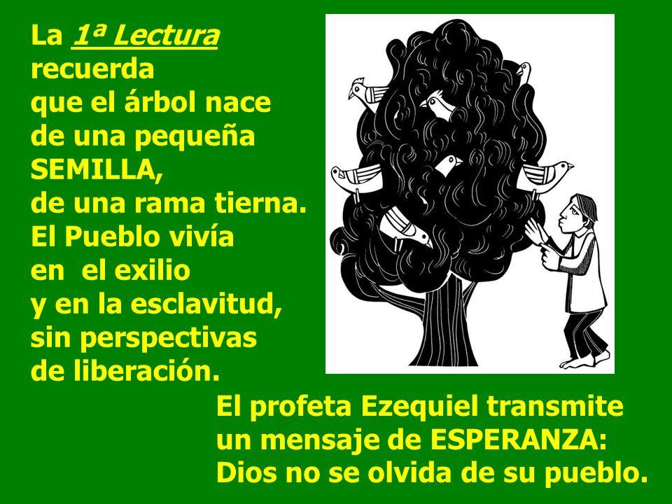 La 1ª Lectura recuerda que el árbol nace de una pequeña SEMILLA, de una rama tierna.