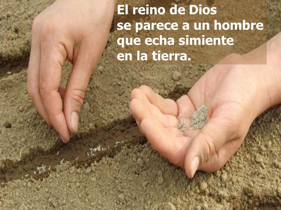 El reino de Dios se parece a un hombre que echa simiente en la tierra.