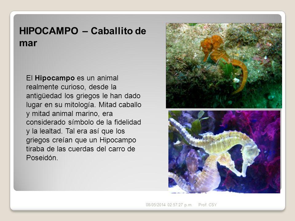 HIPOCAMPO – Caballito de mar