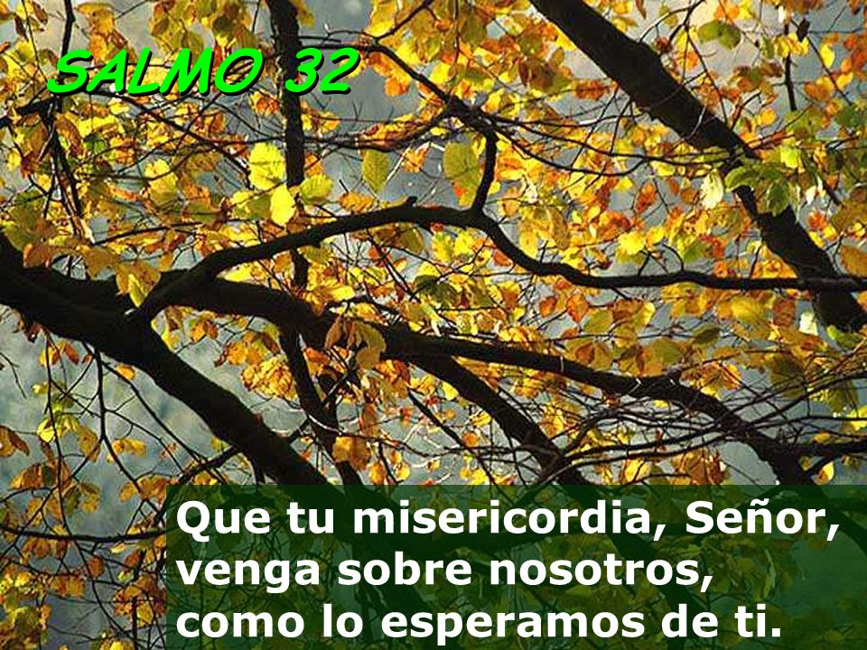 SALMO 32 Que tu misericordia, Señor, venga sobre nosotros, como lo esperamos de ti.