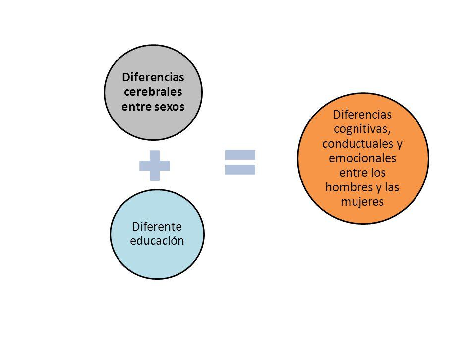 Diferencias cerebrales entre sexos