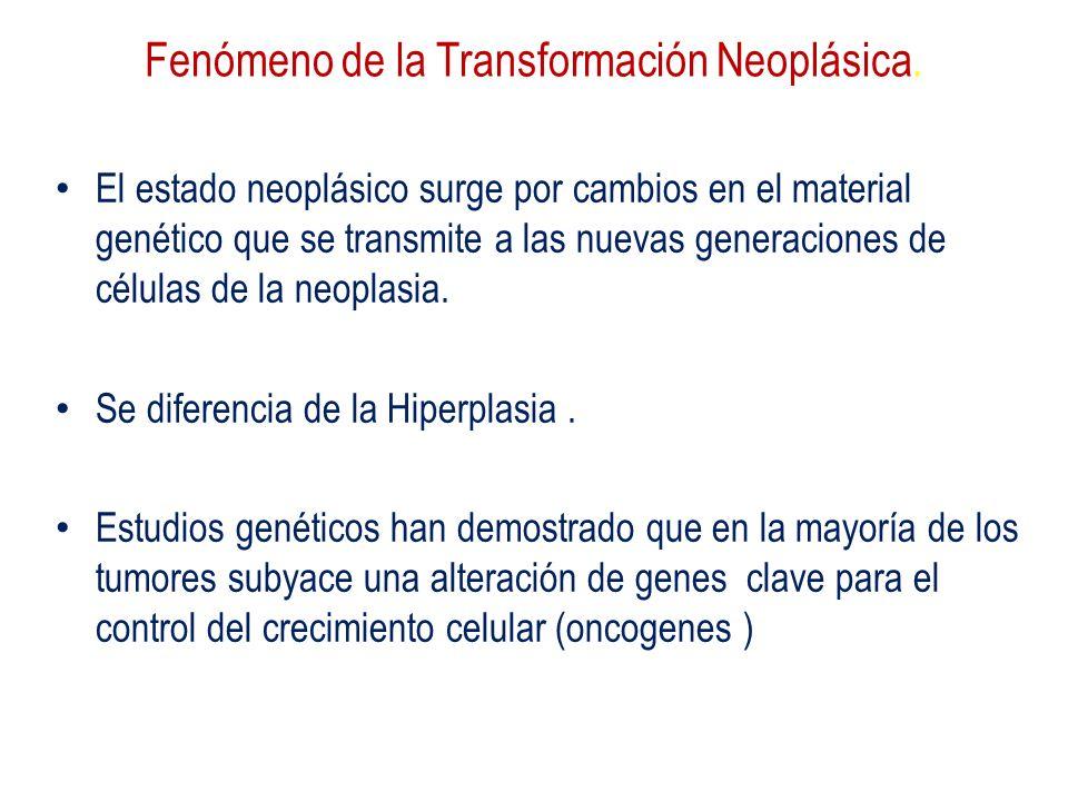 Fenómeno de la Transformación Neoplásica.