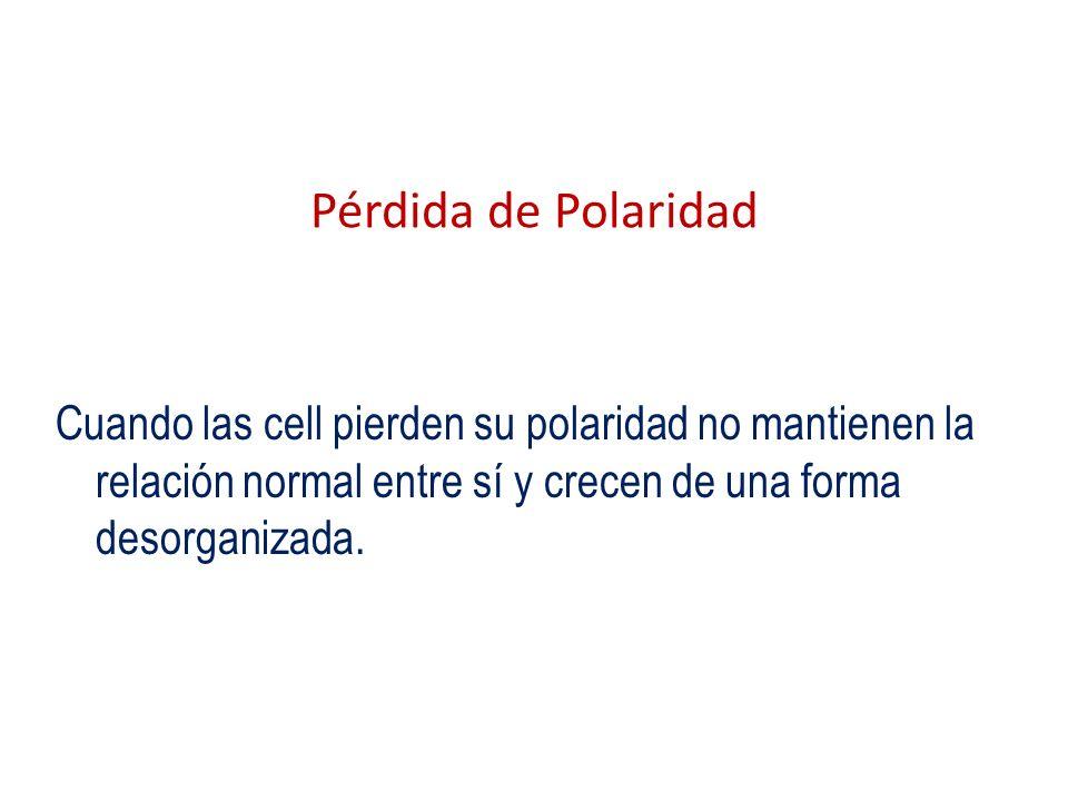 Pérdida de Polaridad Cuando las cell pierden su polaridad no mantienen la relación normal entre sí y crecen de una forma desorganizada.