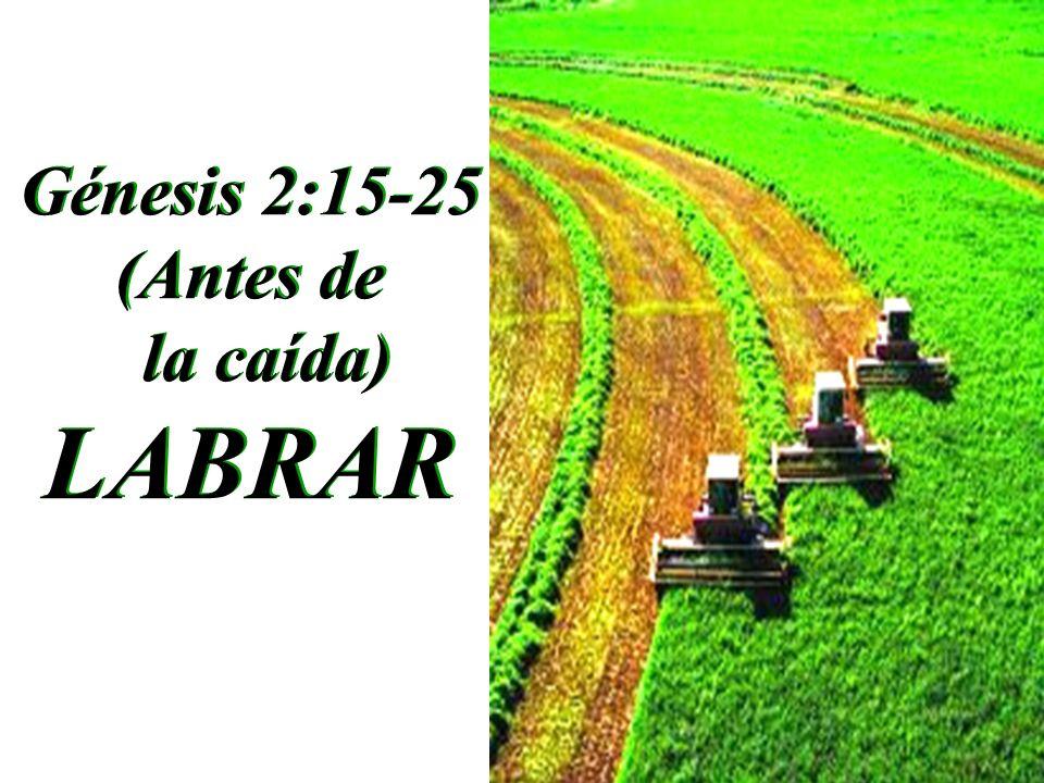 Génesis 2:15-25 (Antes de la caída) LABRAR