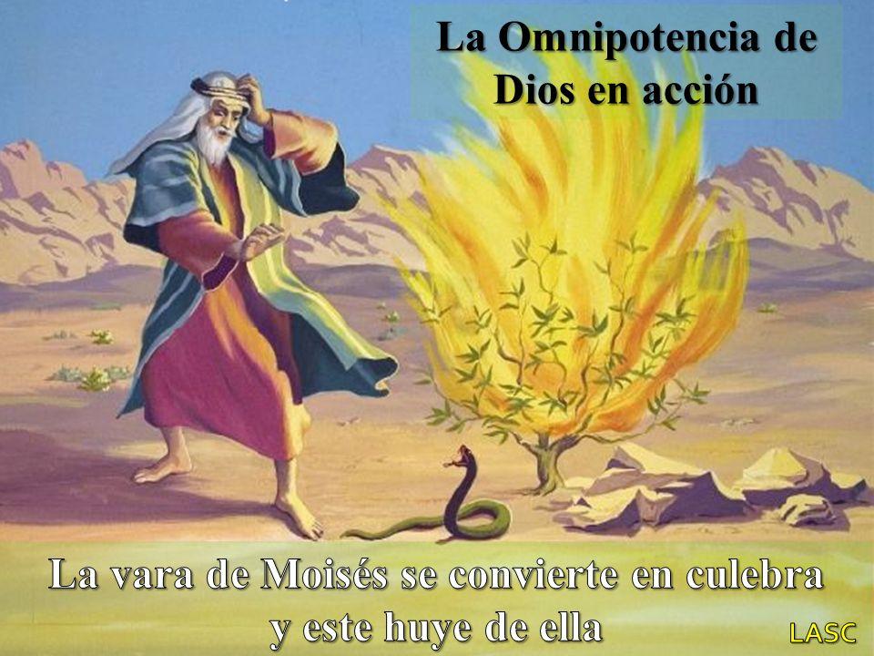 La Omnipotencia de Dios en acción