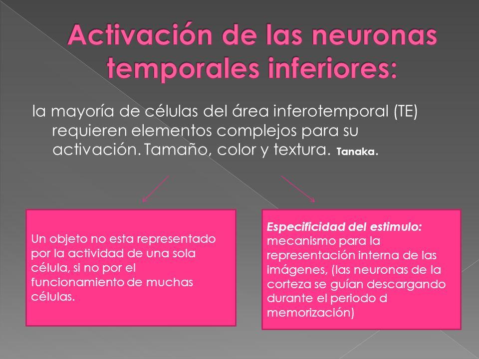 Activación de las neuronas temporales inferiores: