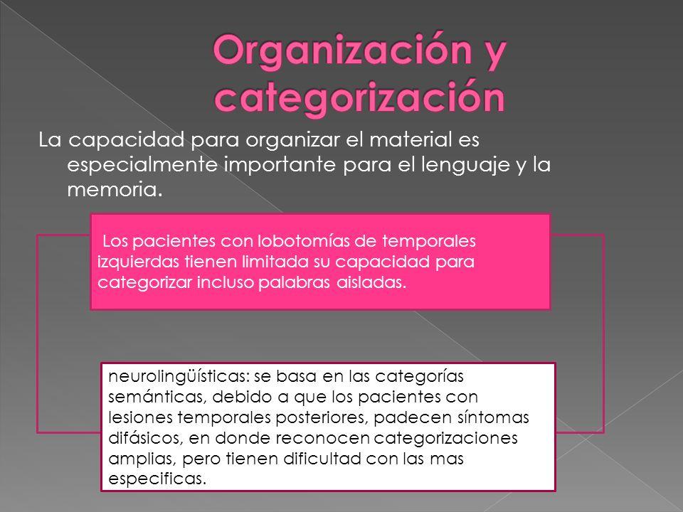 Organización y categorización