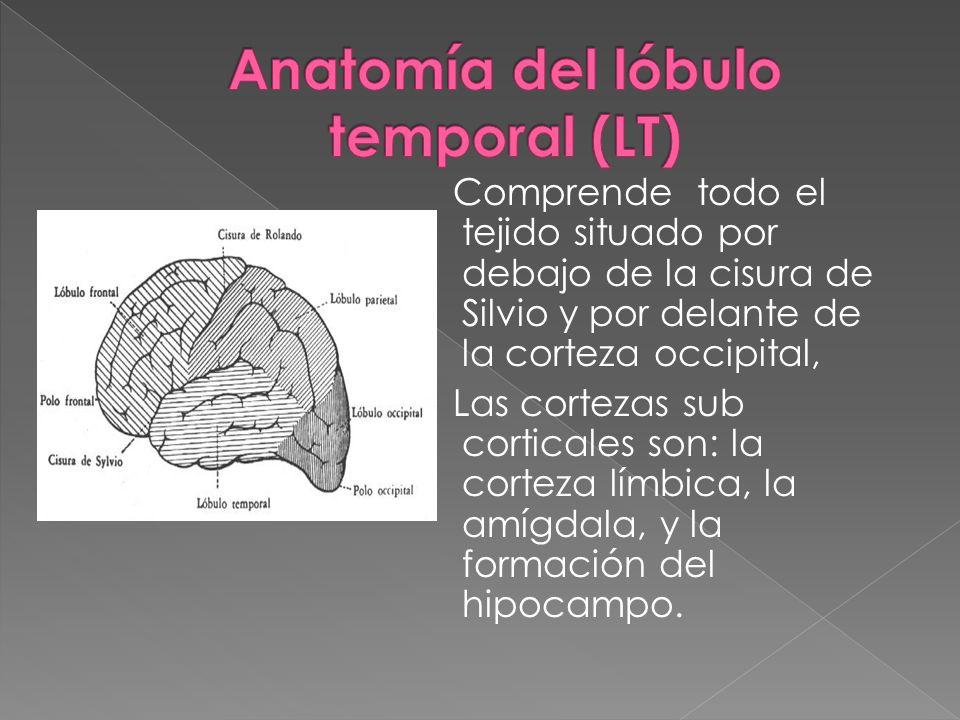 Anatomía del lóbulo temporal (LT)