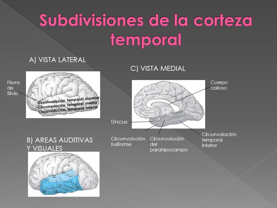 Subdivisiones de la corteza temporal
