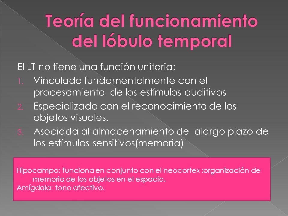 Teoría del funcionamiento del lóbulo temporal