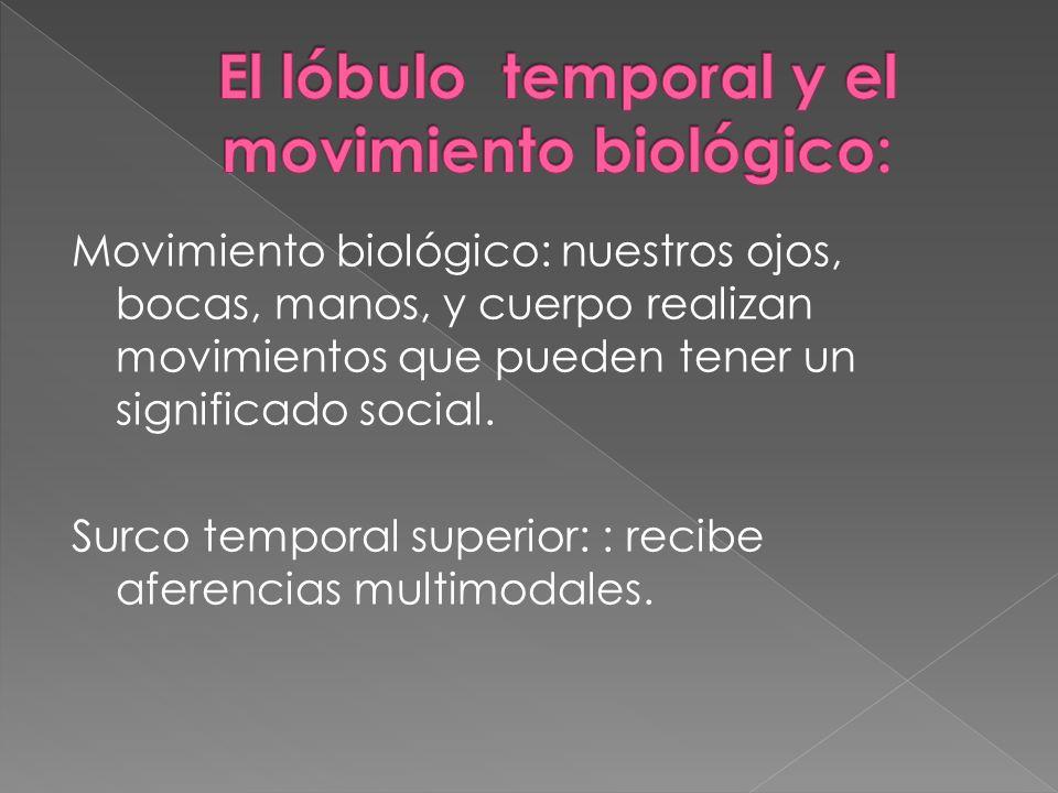 El lóbulo temporal y el movimiento biológico: