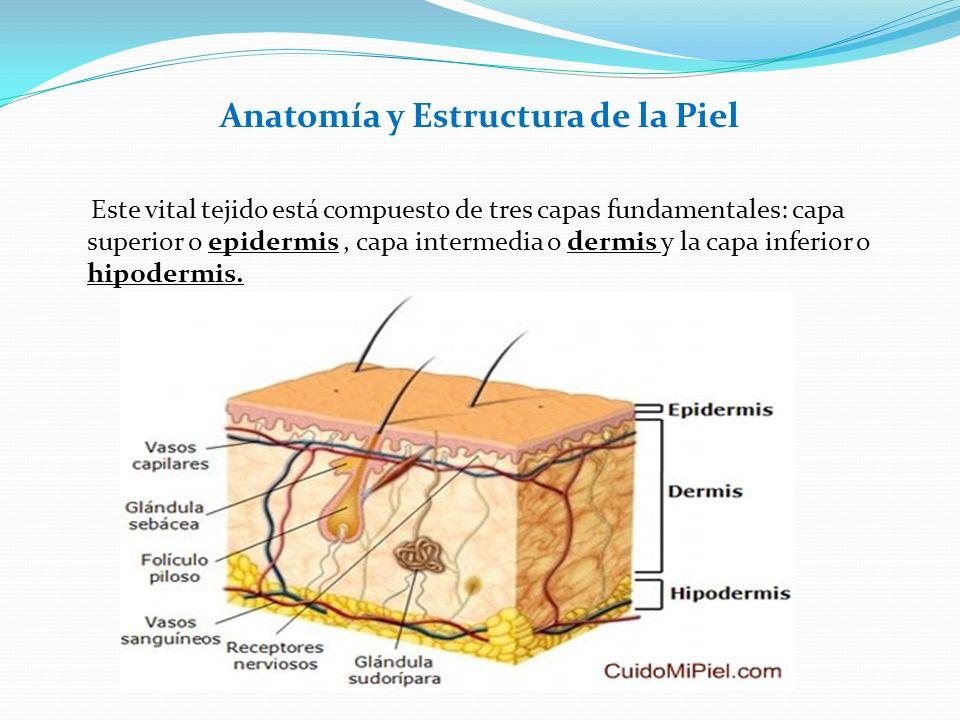 Anatomía y Estructura de la Piel