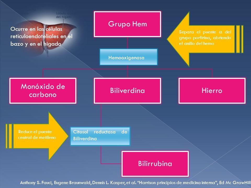 Grupo Hem Monóxido de carbono Biliverdina Bilirrubina Hierro