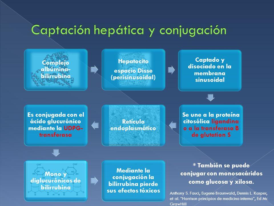 Captación hepática y conjugación