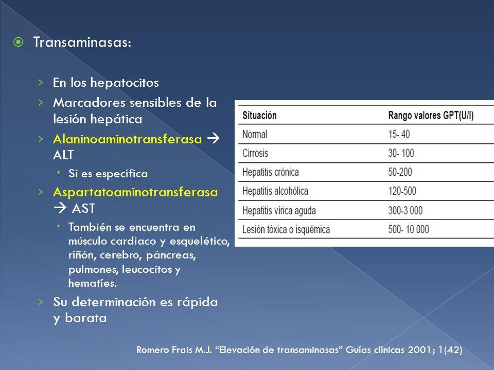 Transaminasas: En los hepatocitos