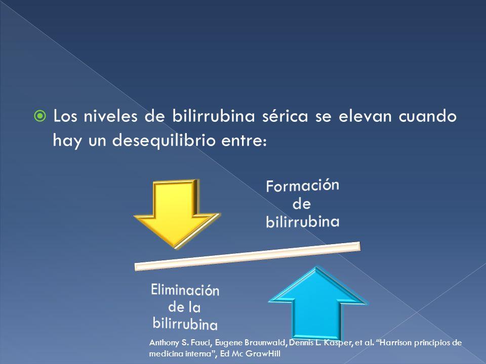 Los niveles de bilirrubina sérica se elevan cuando hay un desequilibrio entre: