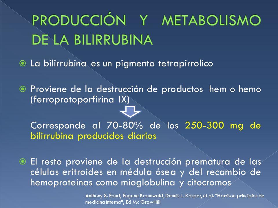 Producción y metabolismo de la bilirrubina