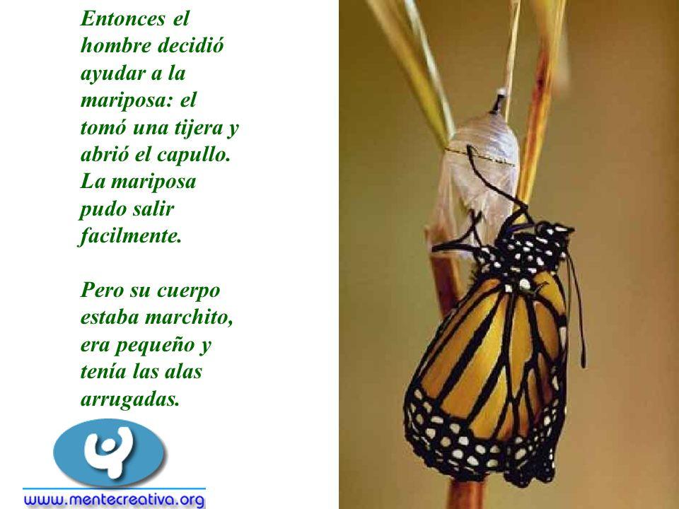 Entonces el hombre decidió ayudar a la mariposa: el tomó una tijera y abrió el capullo. La mariposa pudo salir facilmente.