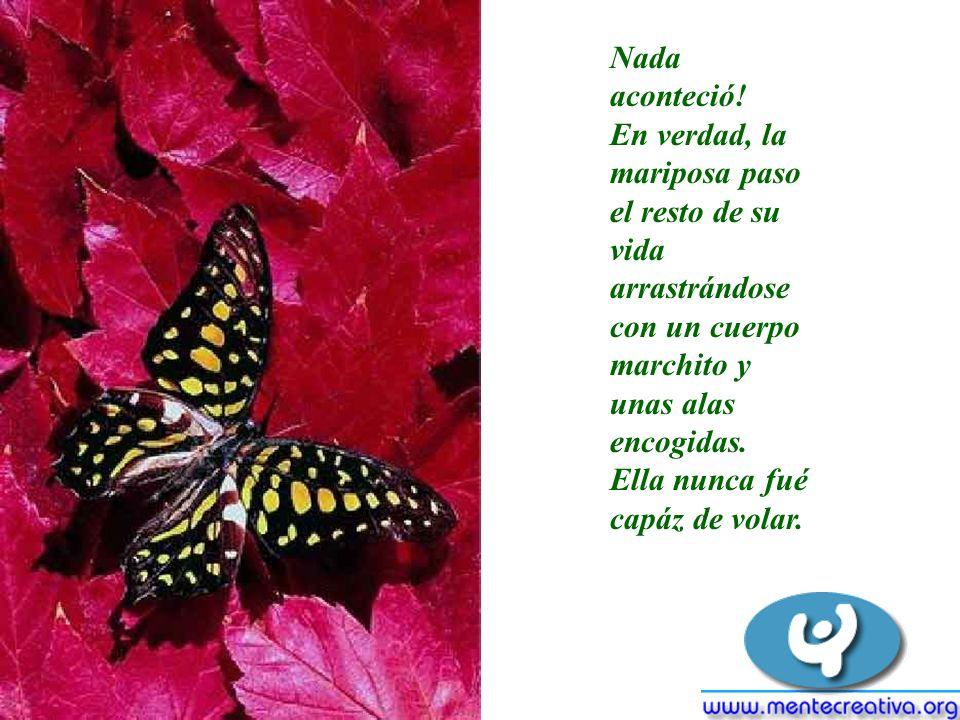 Nada aconteció! En verdad, la mariposa paso el resto de su vida arrastrándose con un cuerpo marchito y unas alas encogidas.