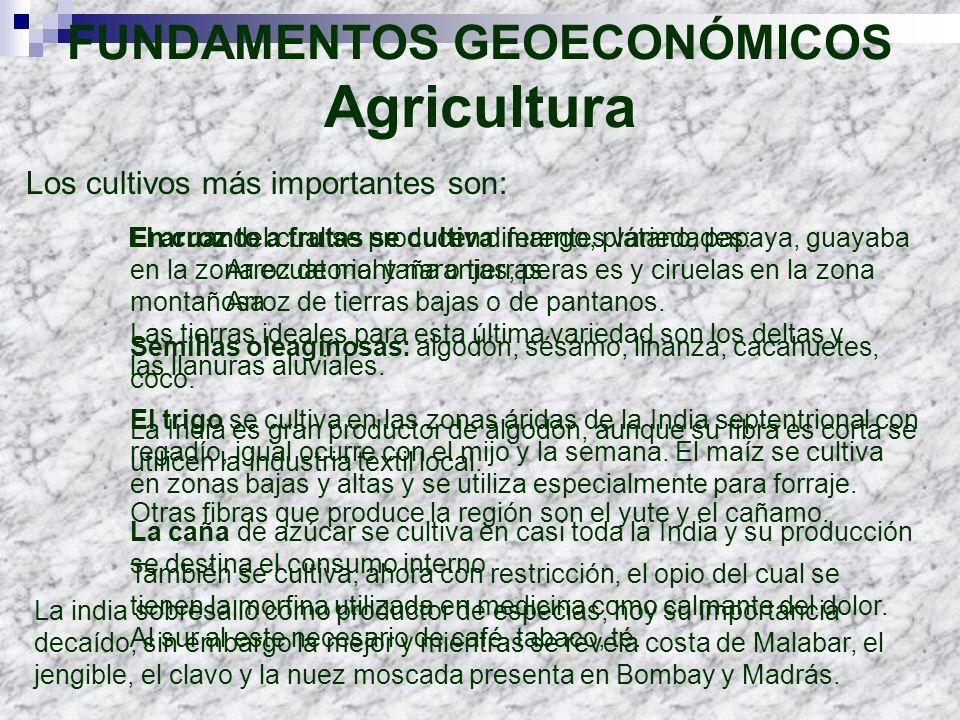 FUNDAMENTOS GEOECONÓMICOS Agricultura