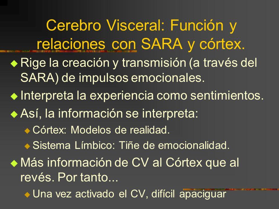 Cerebro Visceral: Función y relaciones con SARA y córtex.