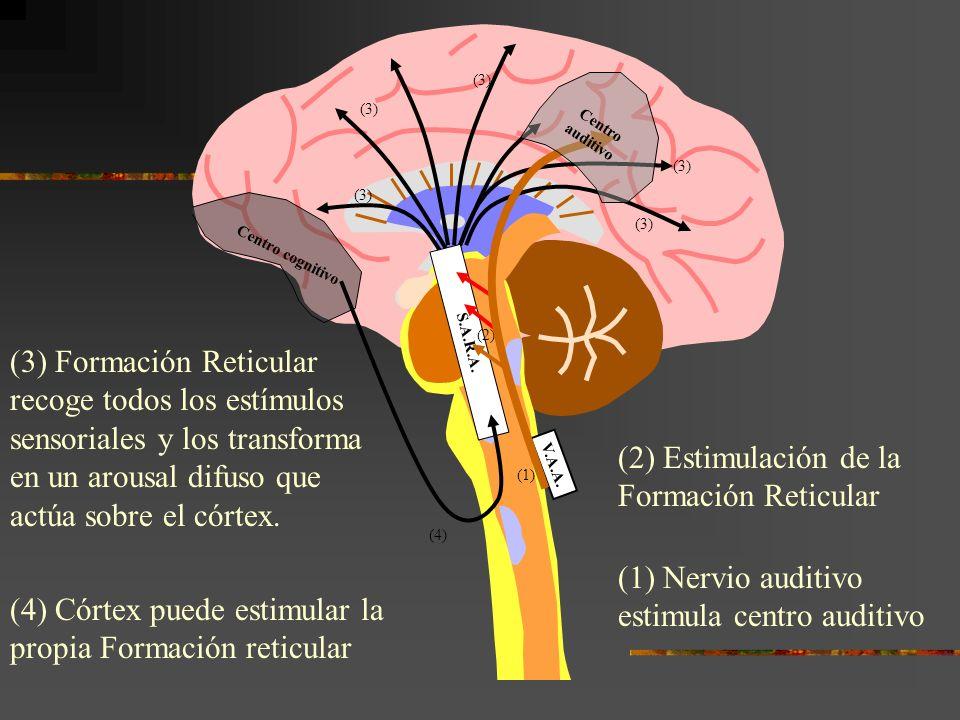 (2) Estimulación de la Formación Reticular