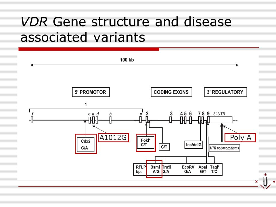 VDR Gene structure and disease associated variants