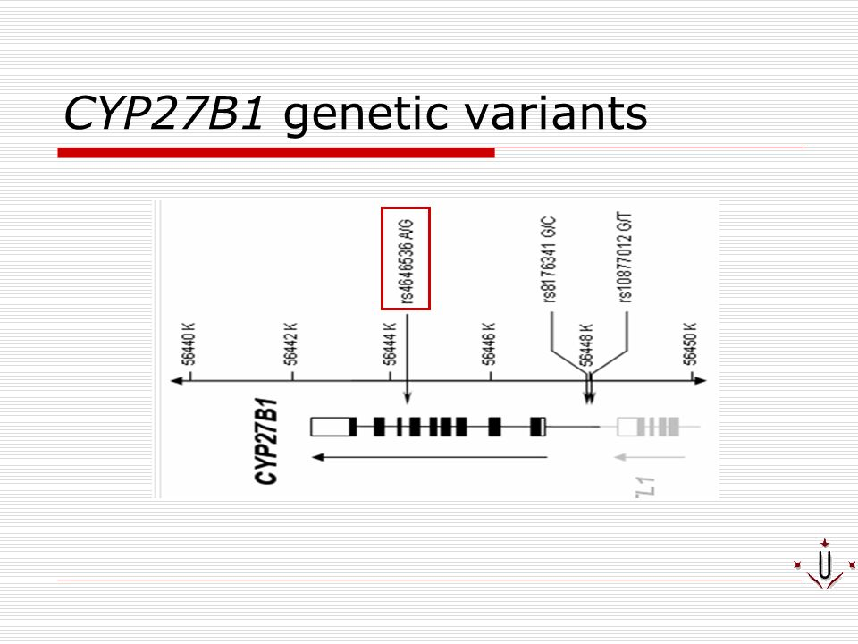 CYP27B1 genetic variants