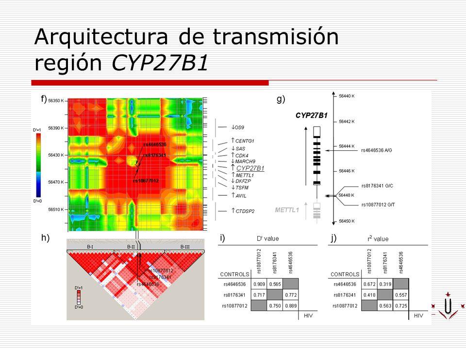 Arquitectura de transmisión región CYP27B1
