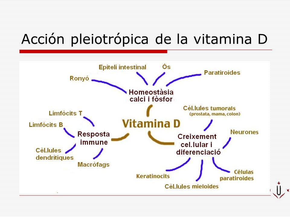 Acción pleiotrópica de la vitamina D