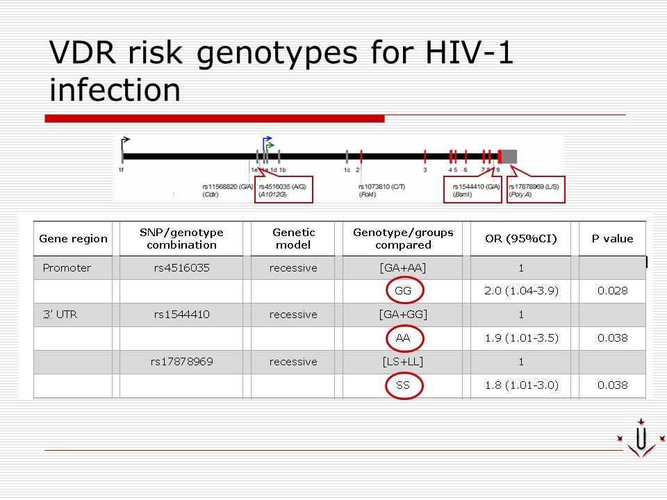 VDR risk genotypes for HIV-1 infection