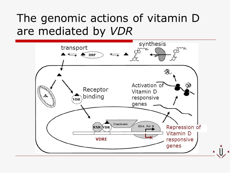 The genomic actions of vitamin D are mediated by VDR