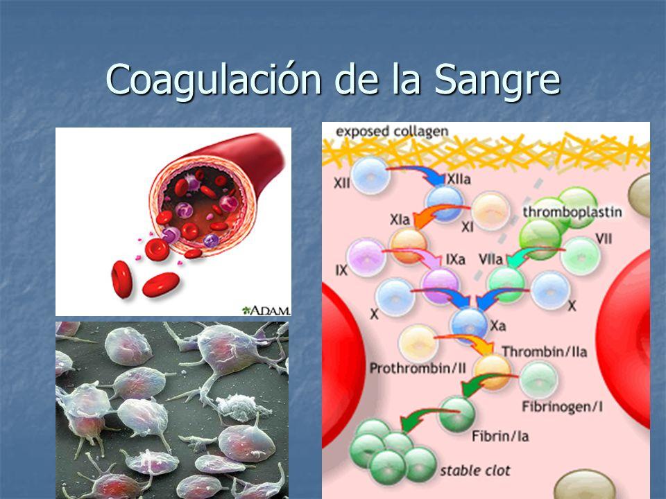 Coagulación de la Sangre