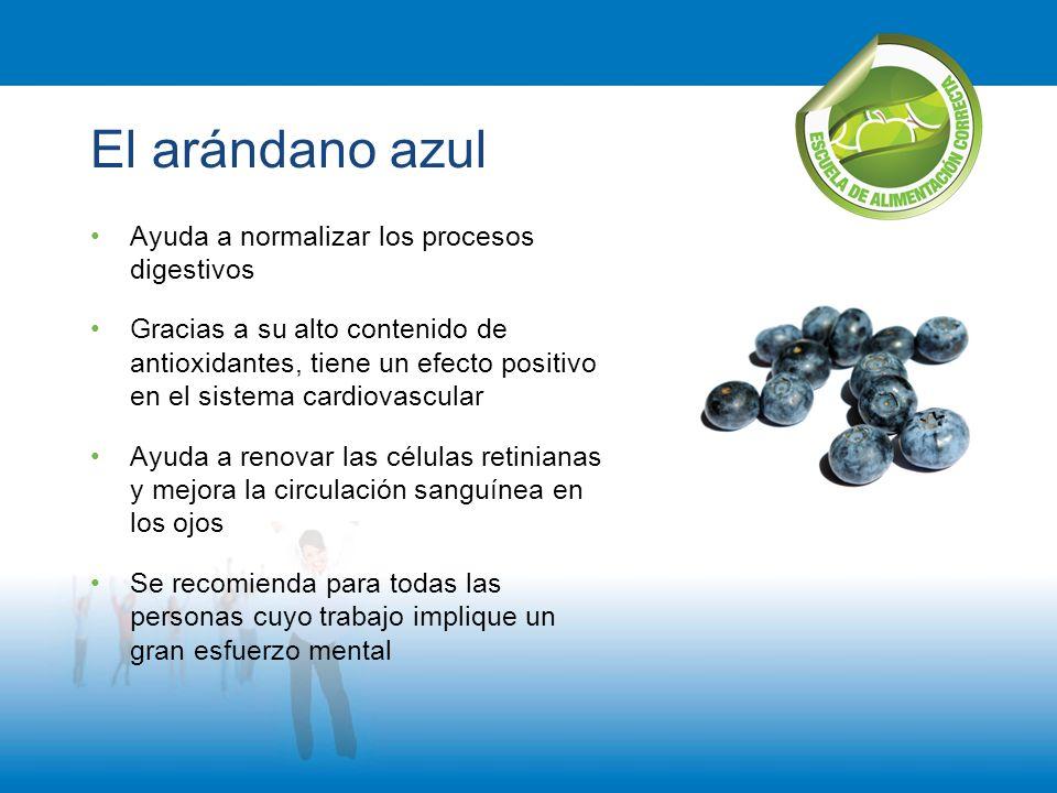 El arándano azul Ayuda a normalizar los procesos digestivos