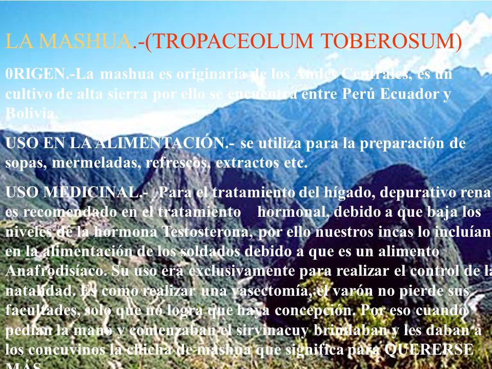 LA MASHUA.-(TROPACEOLUM TOBEROSUM)