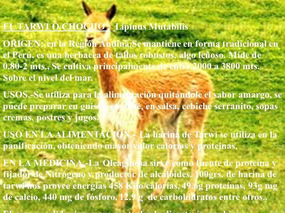 EL TARWI Ó CHOCHO : Lipinus Mutabilis