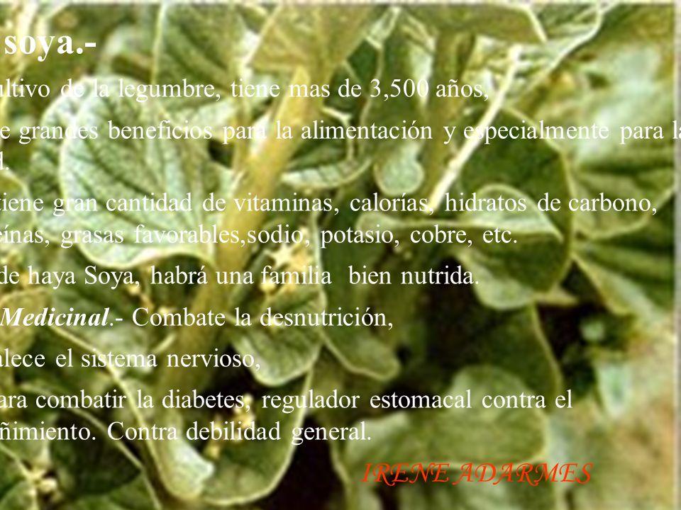 La soya.- El cultivo de la legumbre, tiene mas de 3,500 años,