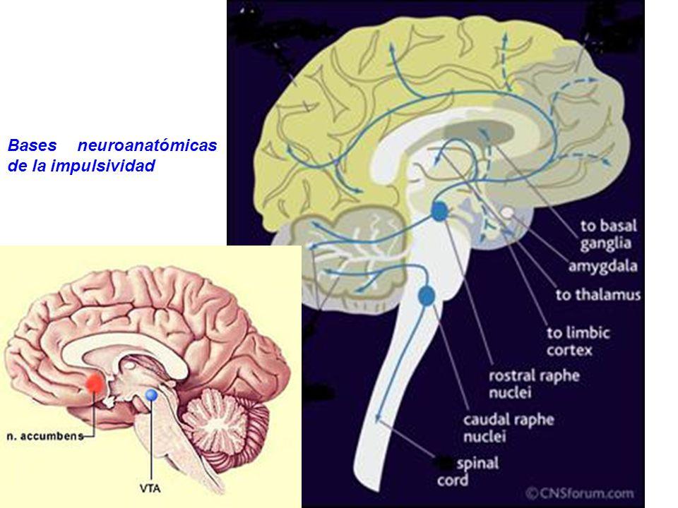 Bases neuroanatómicas de la impulsividad